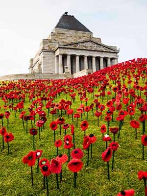 Stemmed poppies on the Shrine mounds